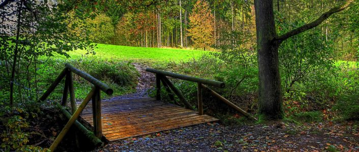 bridge to health